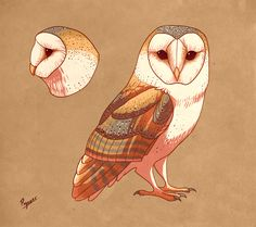 Barn owl by peregyr on DeviantArt Bird Drawings, Animal Drawings, Drawing Animals, Owl Wings, Owl Artwork, Owl Quilts, Owl Illustration, Nature Sketch, Arte Sketchbook