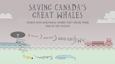 Great article: Saving Canada's Whales!