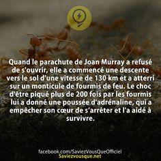 Quand le parachute de Joan Murray a refusé de s'ouvrir, elle a commencé une descente vers le sol d'une vitesse de 130 km et a atterri sur un monticule de fourmis de feu. Le choc d'être piqué plus de 200 fois par les fourmis lui a donné une poussée d'adrénaline, qui a empêcher son cœur de s'arrêter et l'a aidé à survivre.   Saviez-vous que ?