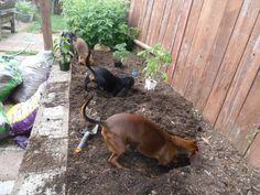 Four Dachshunds Landscaping Service...Must be a Nationwide Franchise because they do my yard also.