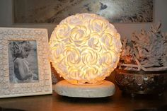 Spotted Shell Lamp