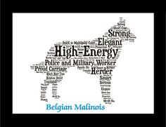 Traits of the Belgian Malinois The Belgian sheepherding breeds, collectively known as Chiens de Berger Belge, shared their early history as general—purpose shepherds and guard dogs of Belgium. Thelsho
