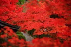 溢れる見ごろの紅葉