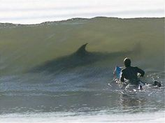 shark-wave - ok, my single biggest fear above the creapers in Cali...a shark in the wave while body surfing.  Still shutter!!!  YIKES!