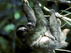 Sometimes I wish I could live like a sloth.
