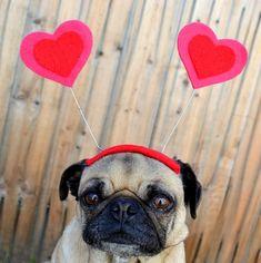 pug + love ~ pugaddict.com