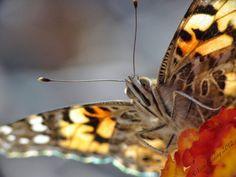 butterfly tongue macro photograph