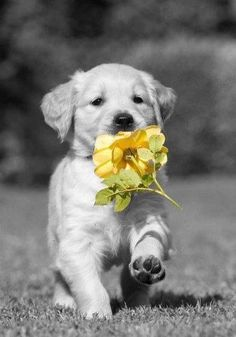 """Bringing you a flower!"""