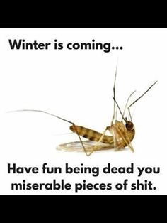 Winter is coming. Have fun being dead you miserable pieces of shit. Memes Humor Negro, Semana Santa Memes, Funny Cute, Hilarious, Funny Dogs, Funny Memes, Lol Text, Mosquitos, Friday Humor