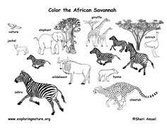 African animals #habitat #biome #savanna colouring page. Grassland animals.