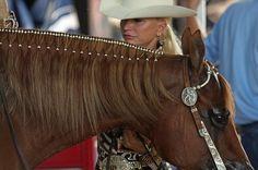 Western braids! #western #horses #braiding