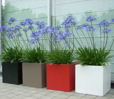 In verschillende kleuren plantenbak