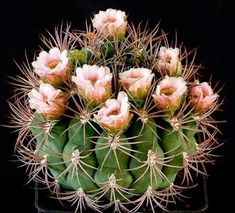 Cactus and Succulents 439