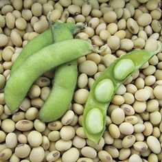 Fiskeby Soybeans