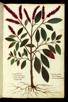 Magnum opus - Ulisse Aldrovandi (1522-1605)
