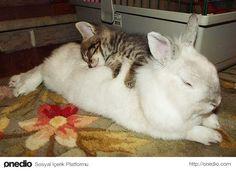İçinizi Isıtacak, Birbirleriyle Sarılarak Mutlu Mesut Uyuyan 24 Tatlı Hayvan