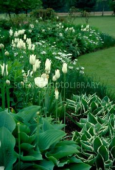 38 Amazingly Green Front-yard & Backyard Landscaping Ideas Get Basic Engineering, Home Design & Home Decor. Amazingly Green Front-yard & Backyard Landscaping Ideasf you're anything like us, y Moon Garden, Dream Garden, White Tulips, White Flowers, Exotic Flowers, Green Flowers, Yellow Roses, Beautiful Flowers, Garden Cottage