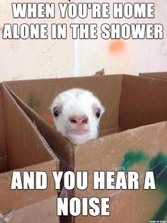 "Cute & funny baby goat meme. ""When you're home alone in the shower and you hear a noise."""
