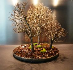 Bonsai - Group Planting in Winter