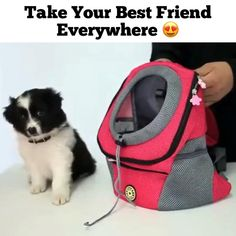The Pooch Pack - The dog & pet carrier that& going viral! Trusted by thousands of pet lovers for every adventu - Cute Little Animals, Cute Funny Animals, Cute Dogs And Puppies, Pet Dogs, Dog Gadgets, Gato Gif, Dog Items, Pet Carriers, Dog Grooming