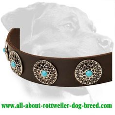 Awesome Rottweiler Leather Dog Collar
