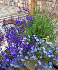 Lovely vignette, Doon's  garden