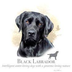 Black Labrador Retriever ( lights only )