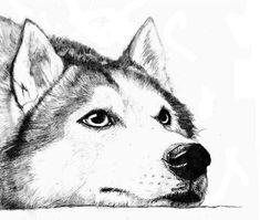 Husky, Schema in der Quelle Dog Pencil Drawing, Husky Drawing, Pencil Art Drawings, Cool Art Drawings, Art Drawings Sketches, Animal Sketches, Animal Drawings, Animal Design, Art Sketchbook