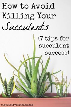 Avoid killing your succulents- 7 tips from the experts More