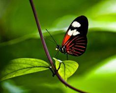 ~ Butterfly Effect ~  Butterflies are an inspiration 4 Spring Summer 2012 Fashion Print.