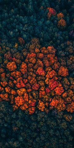 Trees peak, forest, trees, aerial view, wallpaper Source by Iphone Wallpaper Herbst, Ed Wallpaper, Nature Wallpaper, Wallpapers Of Nature, Forest Wallpaper Iphone, Artistic Wallpaper, Mountain Wallpaper, Animal Wallpaper, Iphone Wallpapers