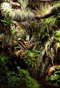 Vivarium design and construction - The World of Frogs
