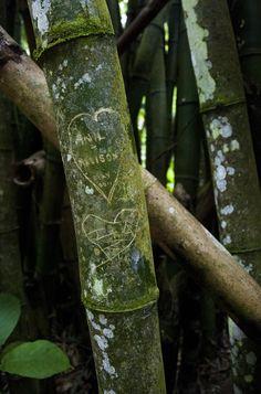 Bamboo Cathedral, Chaguaramas, Trinidad and Tobago. by Kayode Quashie on 500px
