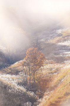 兵庫 砥峰高原 Tonomine Plateau by Yusuke Yamamoto