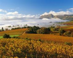 Indeed, South Africa is one of the fastest growing wine countries in the world. But wine has been a segregated luxury in this diverse country and for the. African Love, Oh The Places You'll Go, Wine Country, Vacation Trips, Touring, South Africa, Vineyard, Beautiful Places, Cape Town