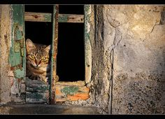 Cat in the window by Andrea Guasti on 500px