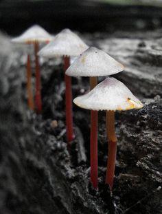 Mushrooms  by bryangarnett1 (Gone Fishin!)