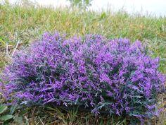 Miniature Dollhouse FAIRY GARDEN ~ Purple Fairy Flowers ~ NEW   Home & Garden, Home Décor, Figurines   eBay!