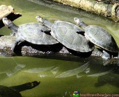 http://www.braziltravelbeaches.com #amazon