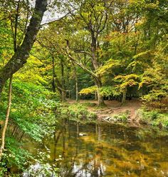 River Teign valley, near Fingle Bridge, Dartmoor, South Devon. Virtual Travel, South Devon, Dartmoor, Britain, Bridge, England, River, Outdoor, Beautiful