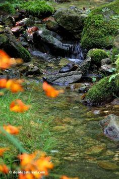 Hay quien sostiene que los molinos de agua fueron uno de los inventos preindustriales más sofisticados. Con la llegada de la máquina de vapor, máquina que abrió el camino a la revolución industrial, estos ingenios fueron poco a poco quedando arrinconados en las orillas fluviales más recónditas. En Asturias se desarrolló una importante industria molinera aprovechando los cientos de corrientes de agua que discurren por su territorio. Paraiso Natural, Spain, Pumpkin, Outdoor, Walks, Nature, Hiking Trails, Natural Playgrounds, Outdoors