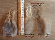 Absolutely brilliant post about Ouessant sheep and their wool. The Spinning Shepherd § La Bergère Filandière: Ouessant Wool 101