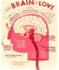 anatomical brain posters - Google Search