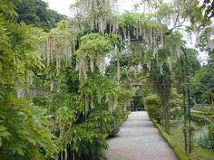 English garden in Paris