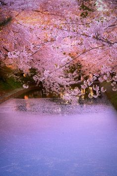 Cherry Blossom, Japan, 桜 Cherry Petals 花筏 Beautiful World, Beautiful Places, Beautiful Pictures, Cherry Blossom Japan, Cherry Blossoms, All Nature, Blossom Trees, Beautiful Landscapes, Nature Photography