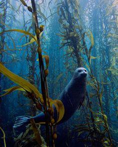 Seals Are the Jello Puppies of the Sea - Read more!