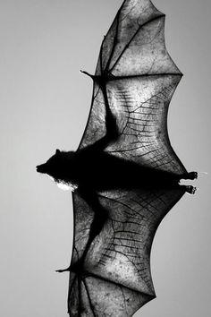 Bat #bat