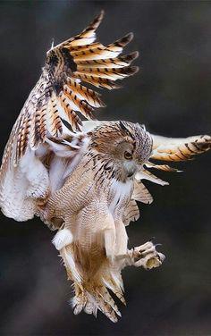 """Результат пошуку зображень за запитом """"owl in flight"""""""