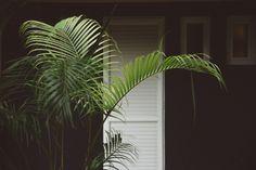 Mauritius, Veranda Resort, Spa Hotel, Hotels, Plant Leaves, Plants, Road Trip Destinations, Travel Inspiration, Destinations