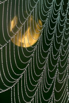 Viewing Moon-thru-dew-drop-loaded-cobweb-strings